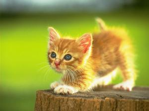 I couldn't find an image of this week's cover, so here is a picture of a kitten.